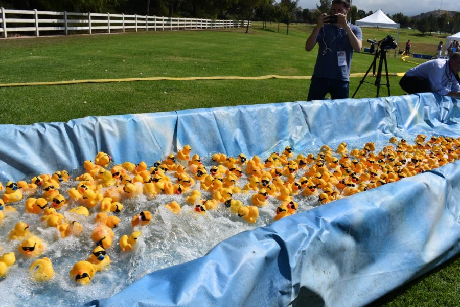 One+of+the+duck+races%21+There+are+three+heats%2C+each+with+over+400+ducks.+Winners+get+money+from+500+to+2%2C000+dollars.