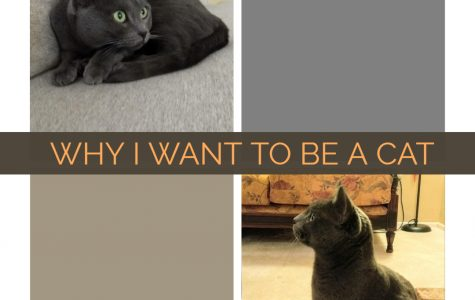 Why I Want to Be a Cat: What We Can Learn from Our Beloved Pets About Social Belonging