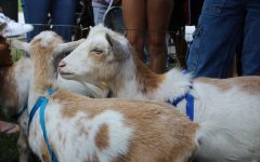 Goats on Campus: How a Few Animals can Provide Students With Mental Help